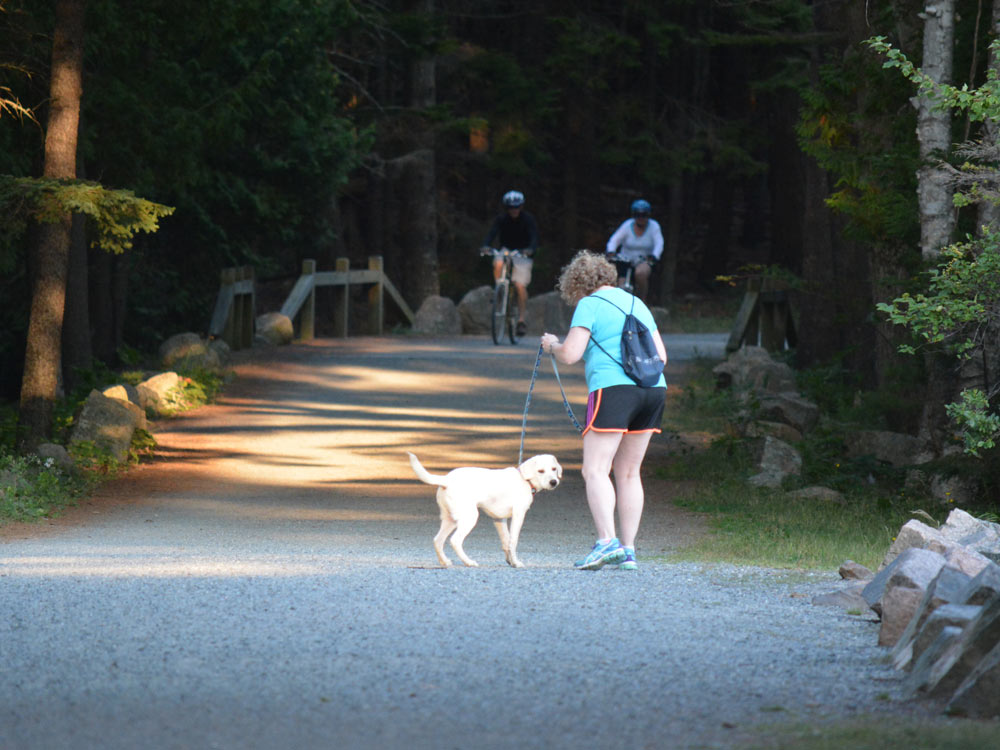 Acadia National Park durable gravel Carriage Roads hiking